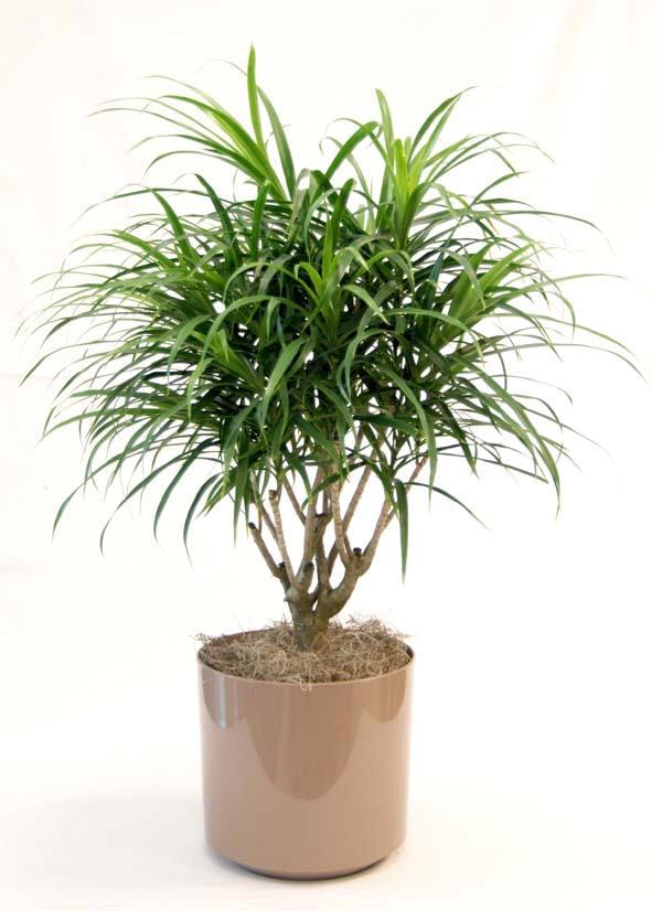 Tropical plants interior plants office plants home - Interior plant maintenance contract ...