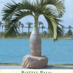 bottlepalm1