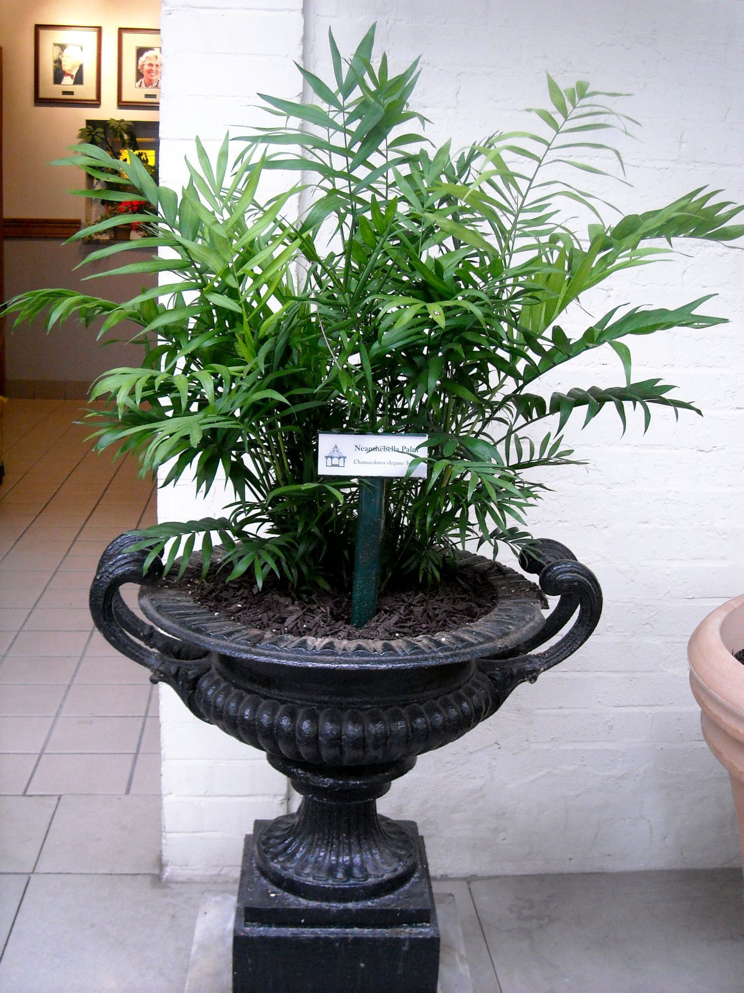 Facts about low light house plants plants in nanopics - Tall house plants ...