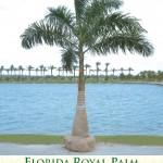 royalpalm1