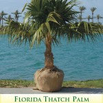 thatchpalm1