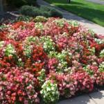 landscaping-annuals-perennials