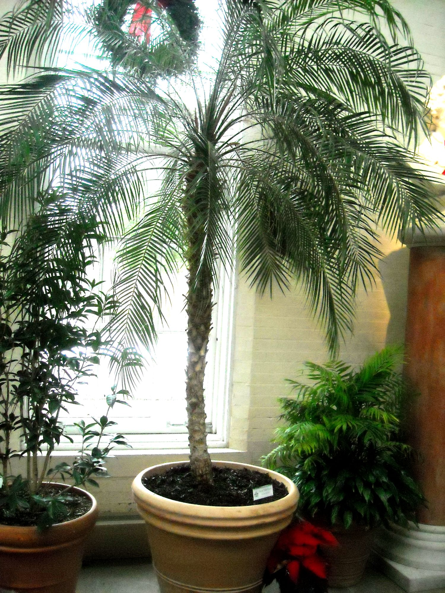 Palm Piper House, Walter Knoll Florist Client, Exotic Palm Trees ...